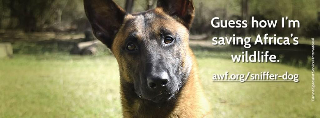 canine detection unit_2