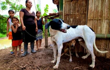 mayanga dog