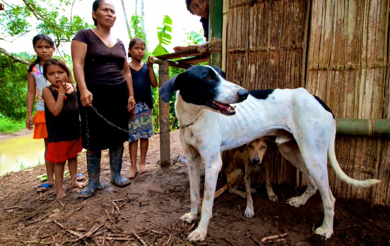 Polujący z psami – SPARCS 2015