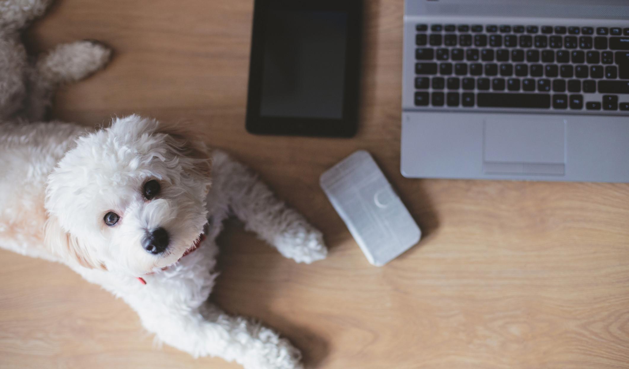 Etat i pies – czy można to pogodzić?