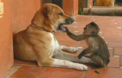 dog and moneky