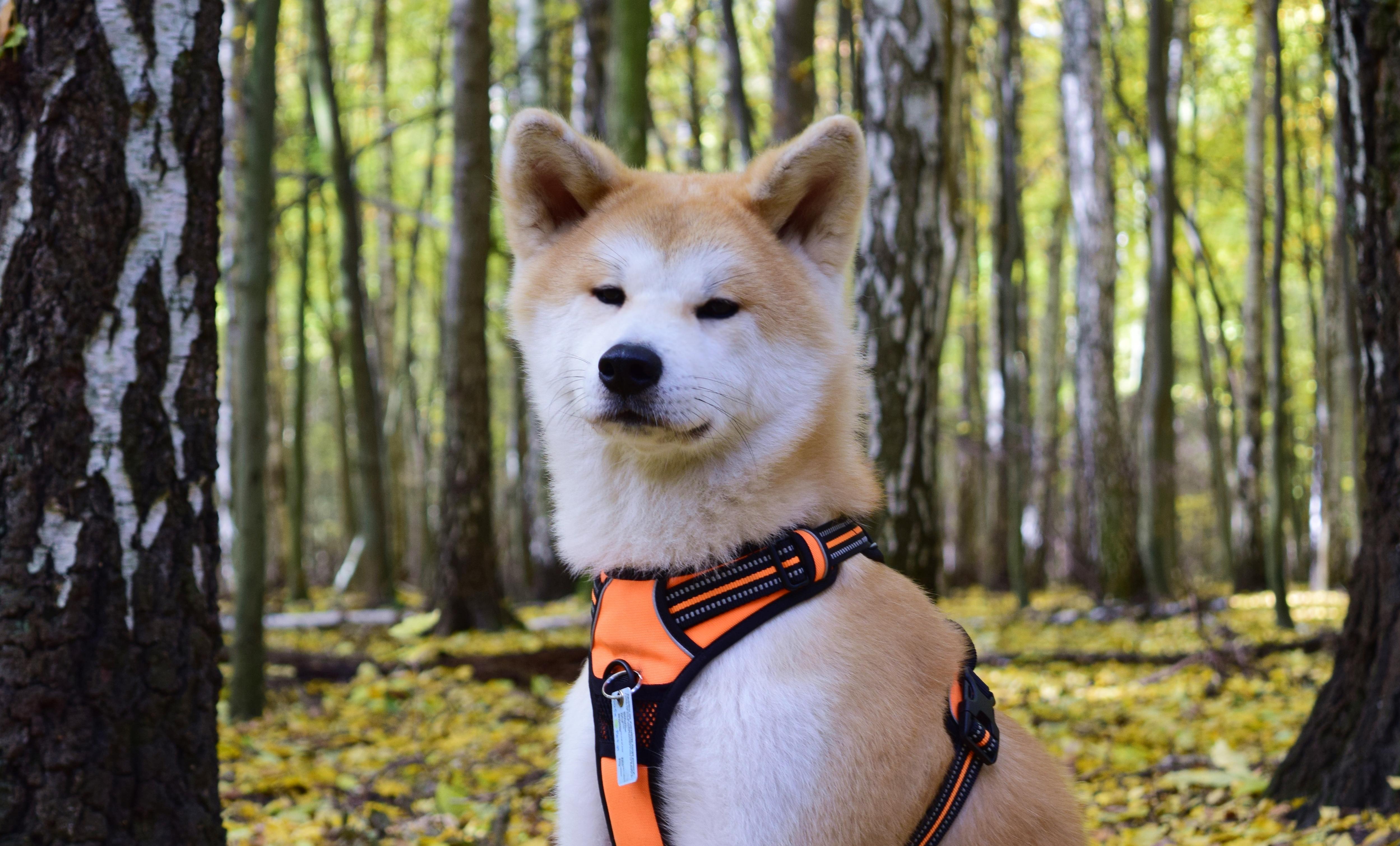 Co pies na październik?
