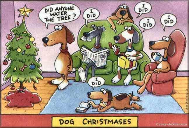 Dogs-Christmas-64735309137