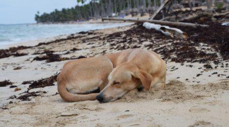 Psie piekło na rajskich plażach