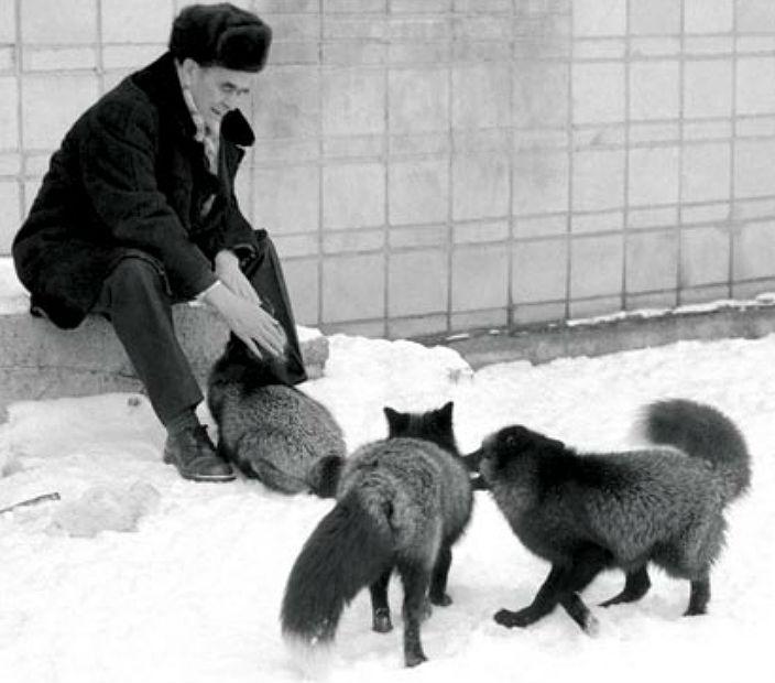 fox_sib02