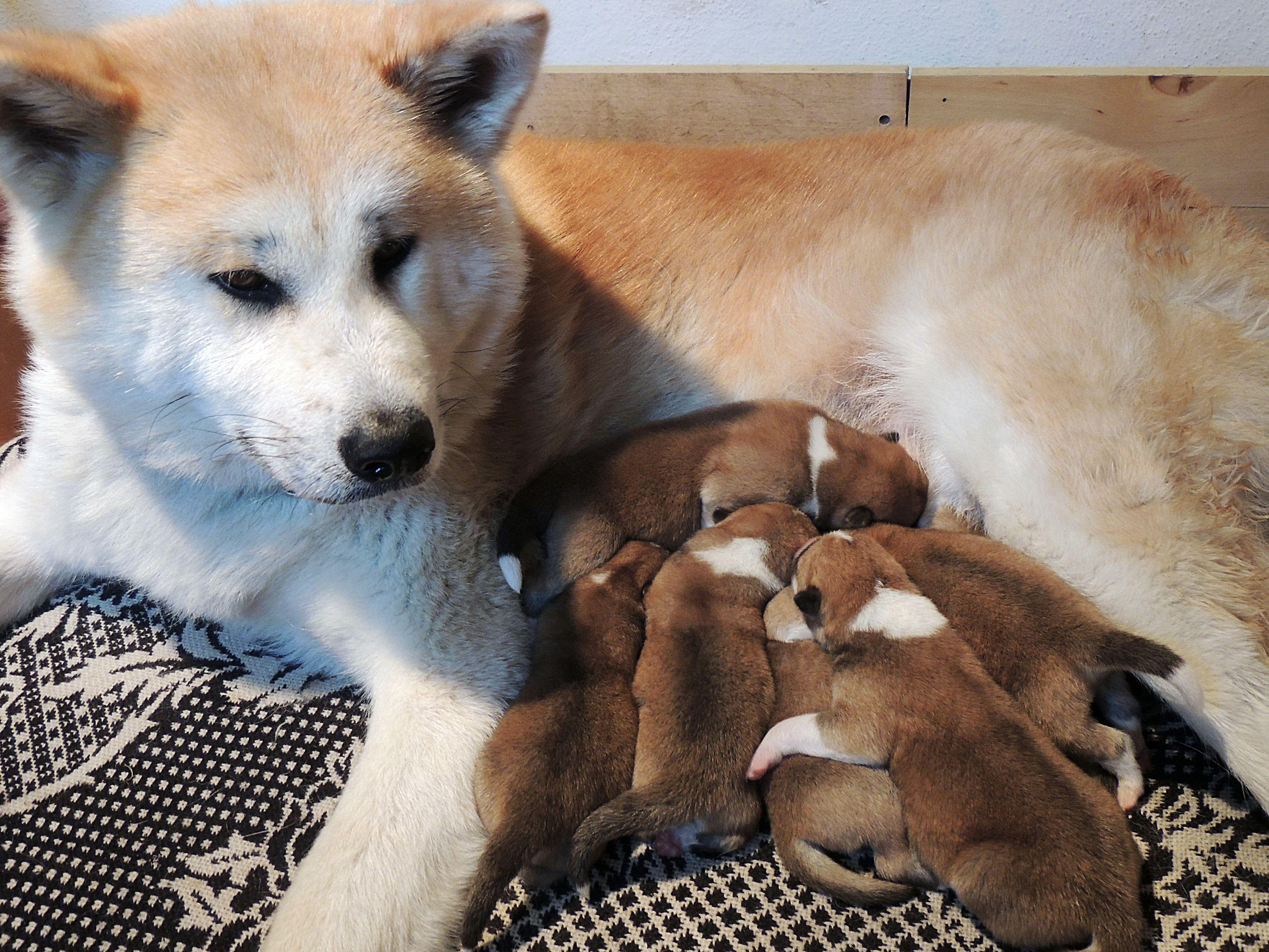 Nie każda psia matka kocha tak samo