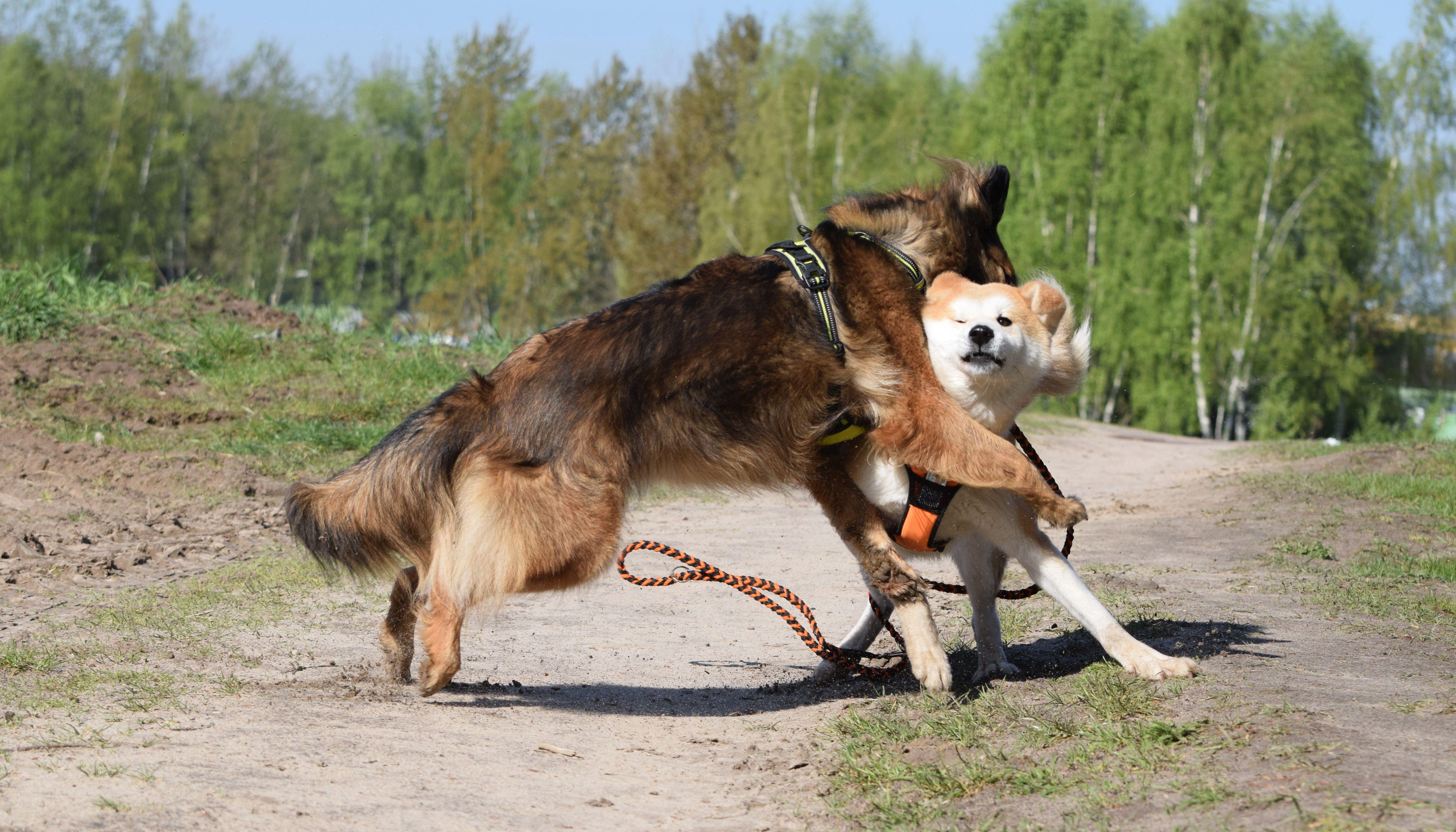 Psia gra o tron, czyli spór o dominację