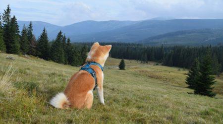 Weź psa i jedź w góry!