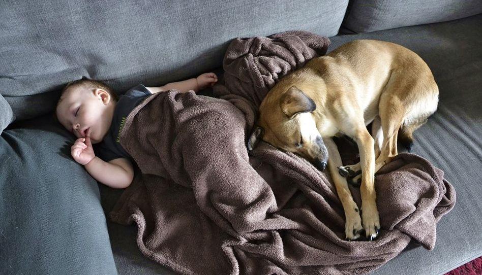 Maluch raczkuje… pies dezerteruje?