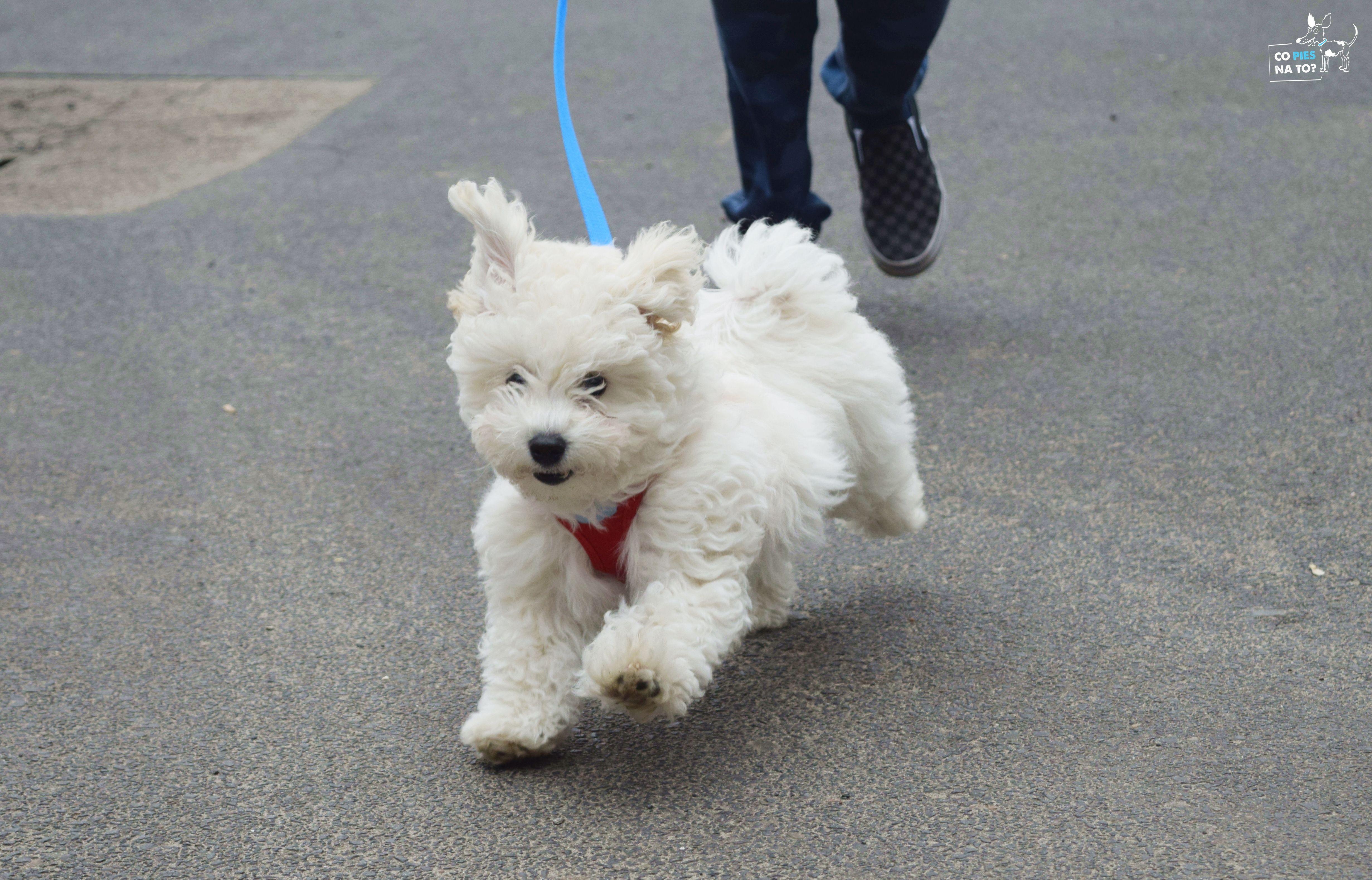 viki1- szkolenie szczeniaka