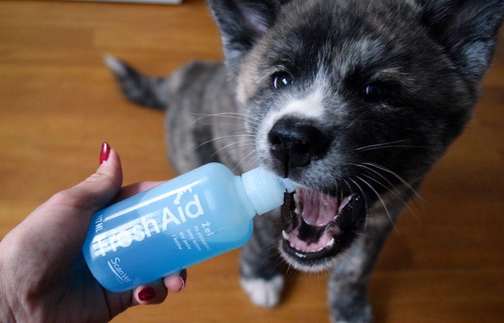 Jak dbać o zęby psa?