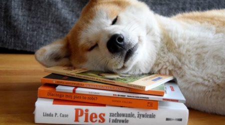 Książki o psach – część 1