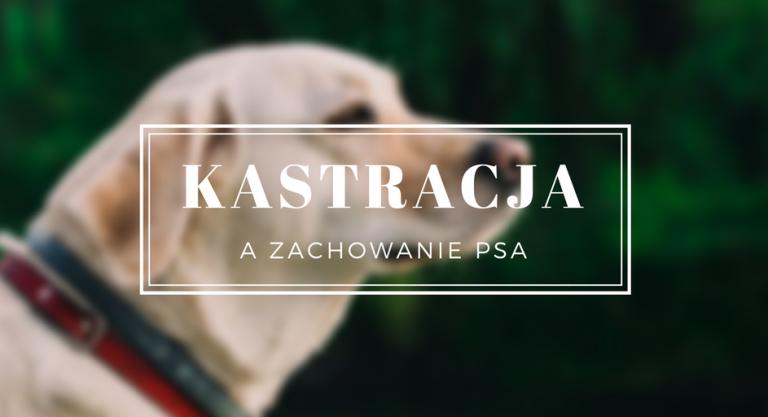 Wpływ kastracji na zachowanie psa
