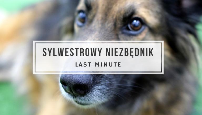 Jak pomóc psu przeżyć Sylwestra?