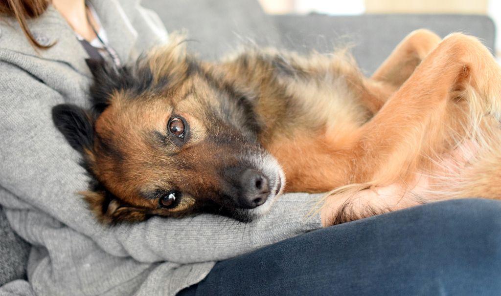 Komunikacja przez dotyk: co pies na masaż?