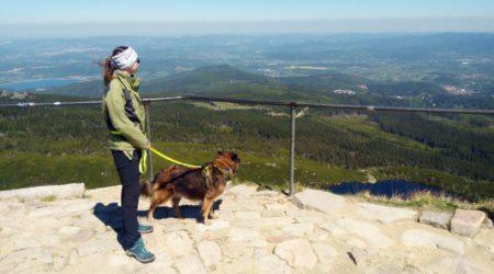Karkonosze z psem – ulubione szlaki