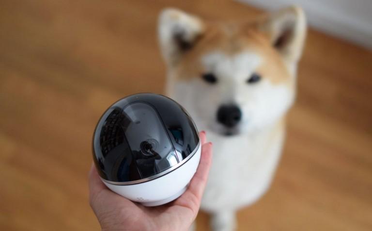 Z kamerą wśród psów, czyli po co Ci dodatkowe oko