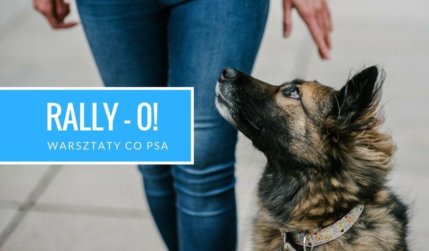 Warsztaty Rally-O dla początkujących: 24.08.2018