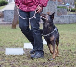 Psie sporty – czy mogą być formą terapii?