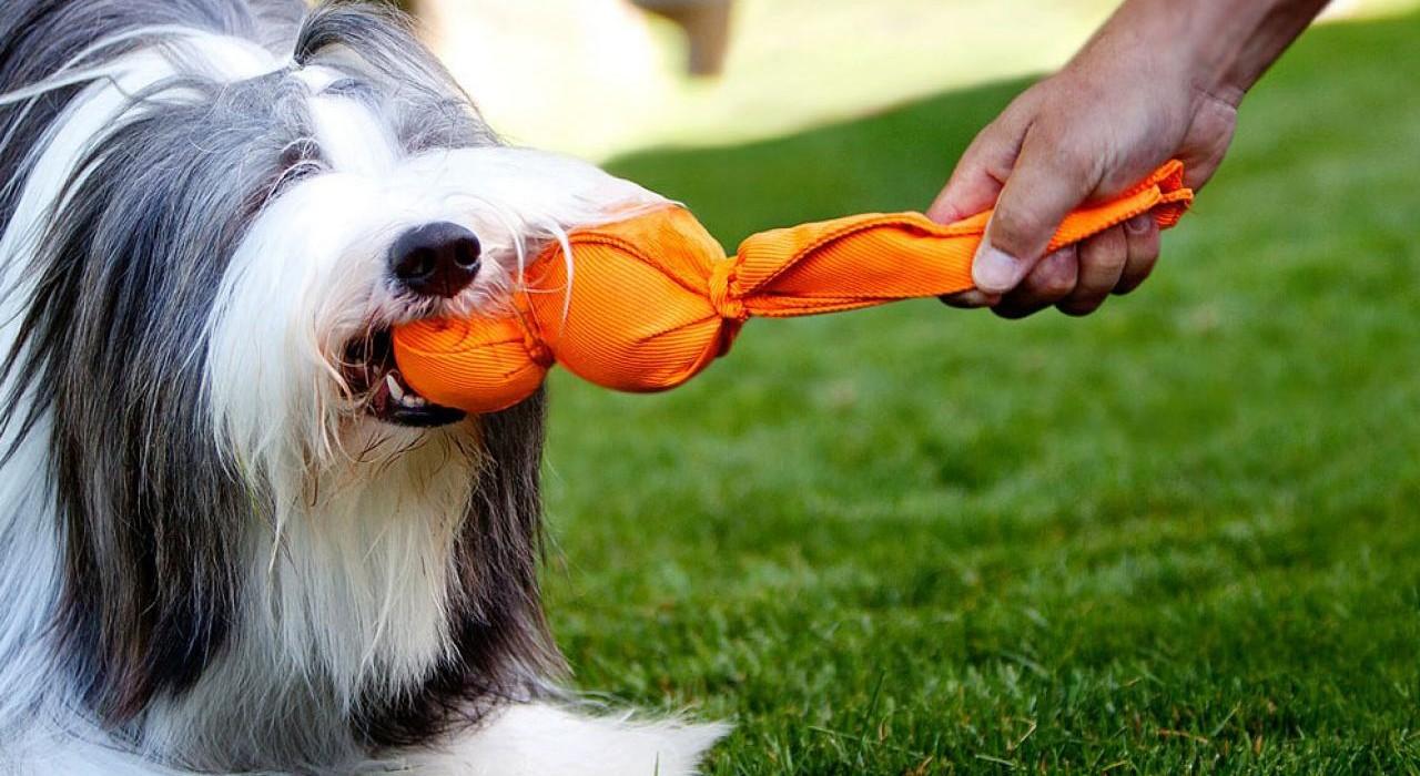 Czego to ludzie dla psów nie wymyślą…