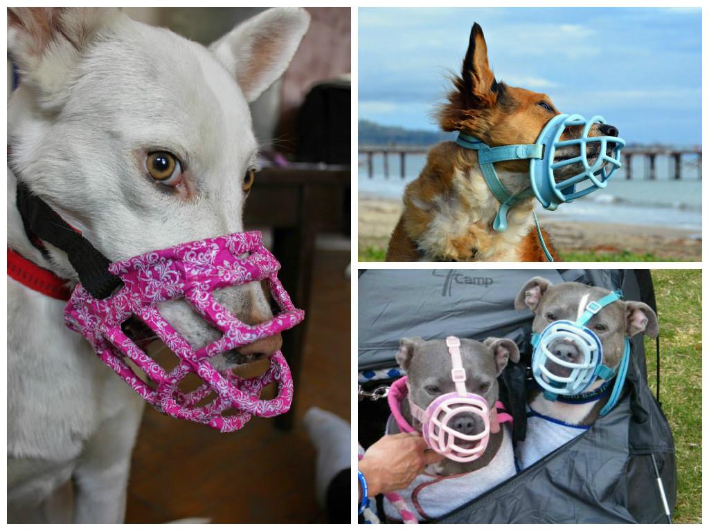 Pies w kagańcu nie musi wyglądać jak kryminalista. Fot.: po lewej - ptysiowy.blogspot.com; po prawej: muzzleupproject.com