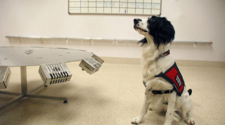Psi nos walczy z nowotworami