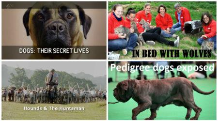 Najlepsze filmy dokumentalne o psach