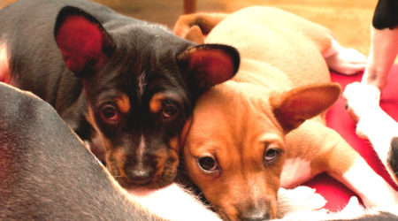 Psie rodzeństwo w nowym domu