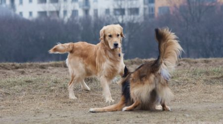 Psy natrętne, psy nieśmiałe…