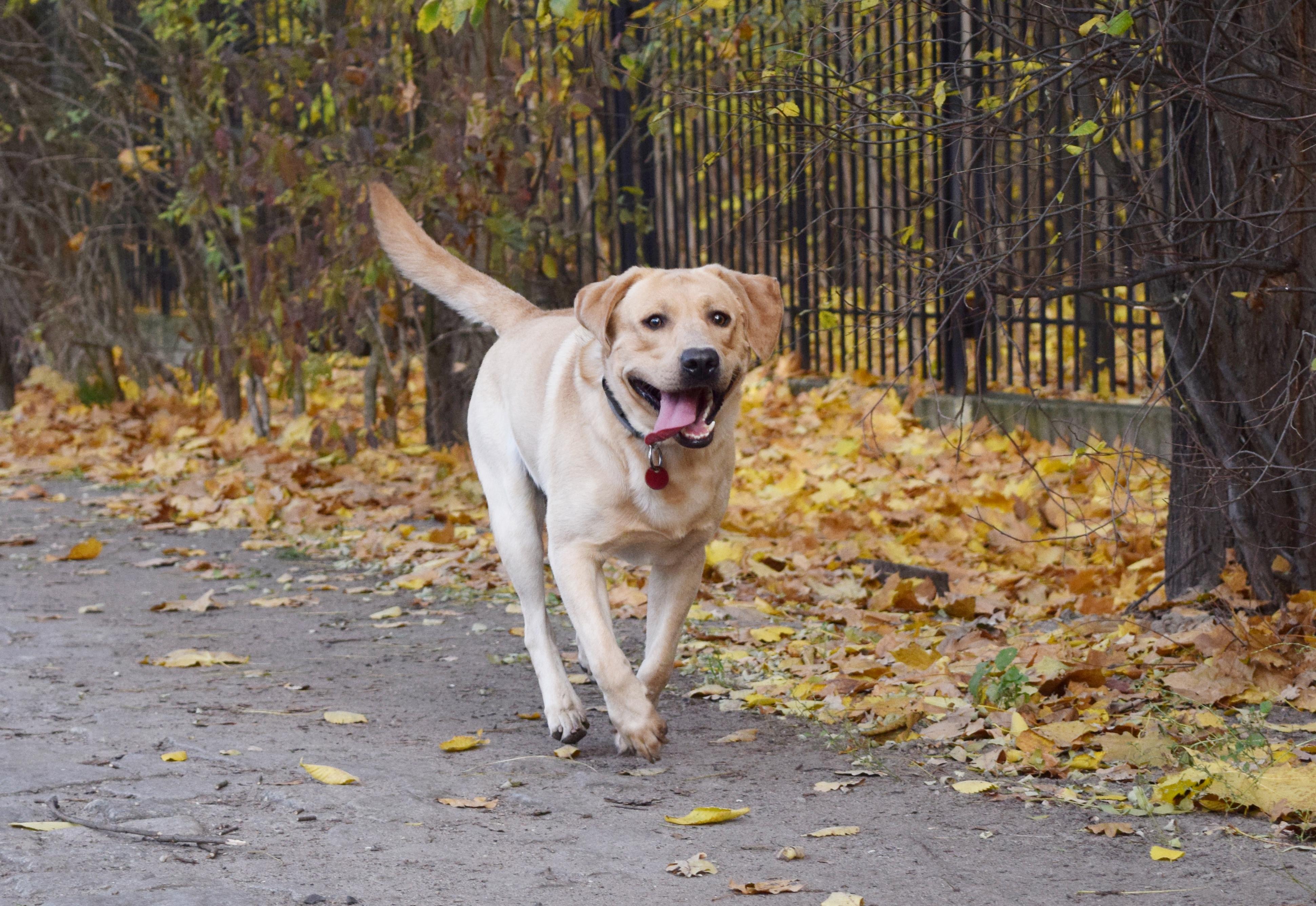 """Sposób na psa, który """"chce się tylko przywitać""""!"""