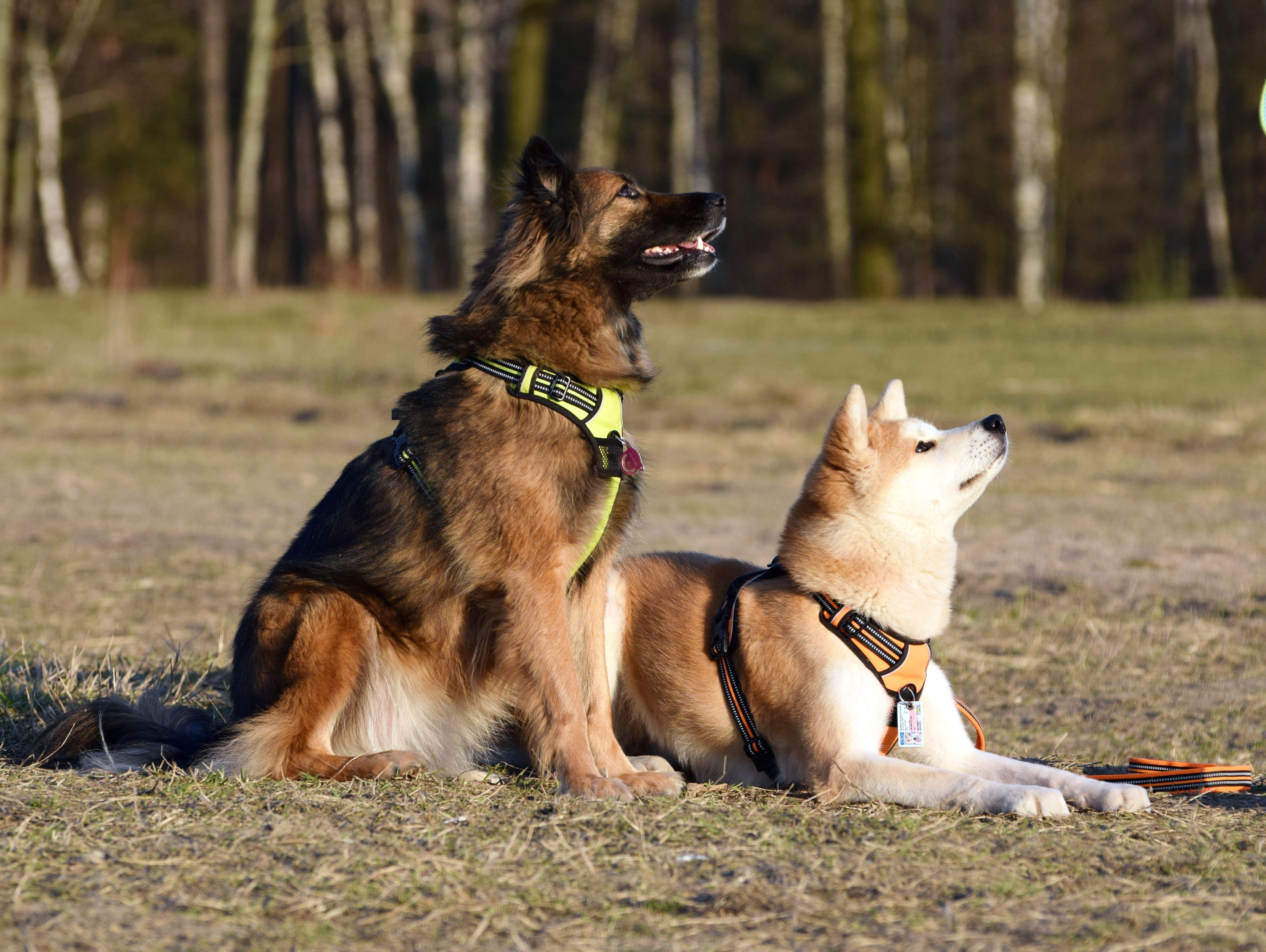 Szkolenie dla psa czy właściciela?