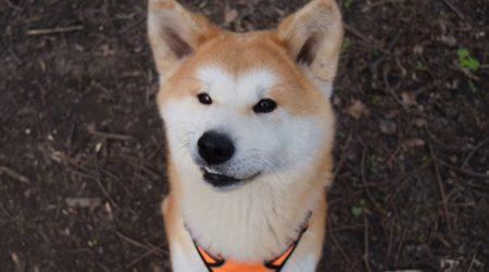 Pies (nie całkiem) idealny