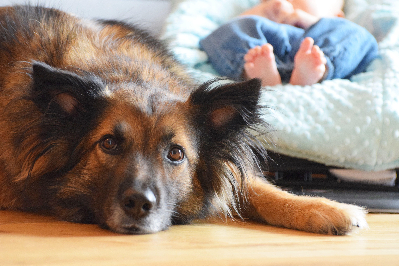 Przygotuj psa na dziecko: 8 zasad!