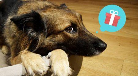 10 pomysłów na prezent dla psiarza