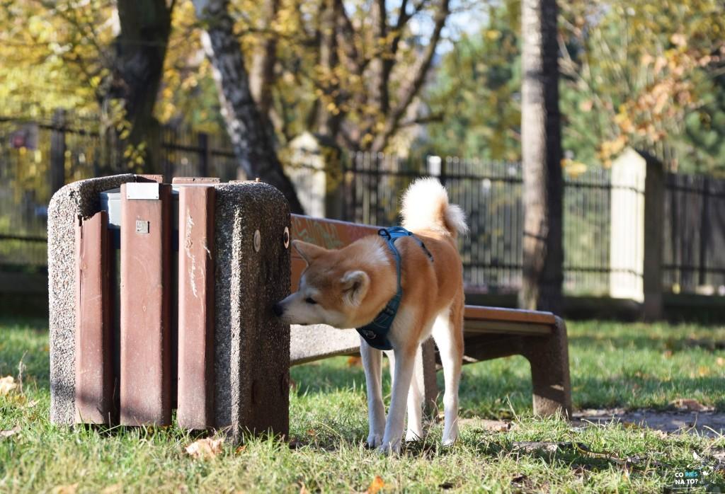 Węszenie to zupełnie naturalne zachowanie psów.