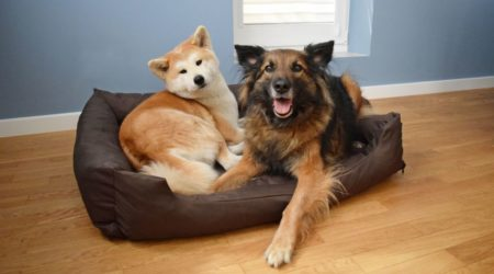 Psie miejsce, psi azyl, psi spokój…