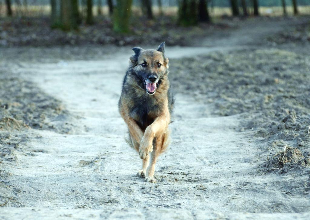 Przywołanie psa – od czego zacząć?