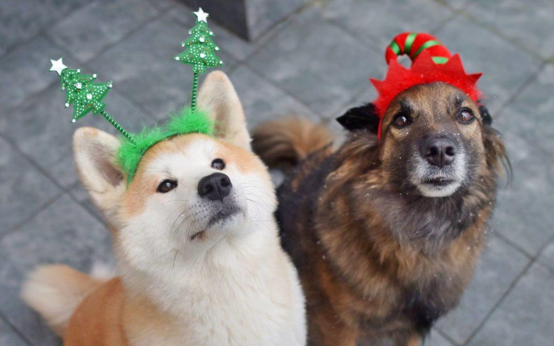 Prezent dla psa i psiarza vol. 3