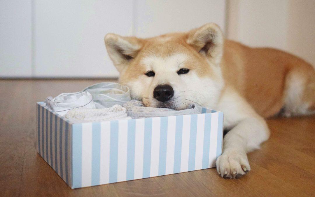 Zabawki edukacyjne dla psów za grosze!