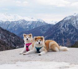Słowenia z psem – co warto zobaczyć?